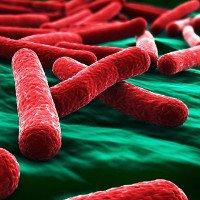 Phát minh ra vật liệu tiêu diệt vi khuẩn E.coli trong 30 giây