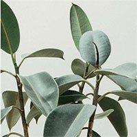 Phương pháp mới khai thác nhiều enzym thực vật