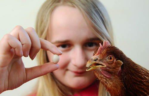 Quả trứng gà nhỏ nhất thế giới