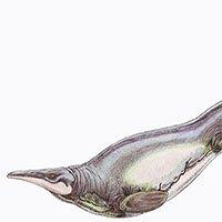 Quái vật biển 66 triệu năm tuổi có kiểu bơi độc nhất vô nhị trên Trái đất