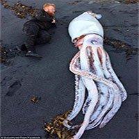 Quái vật mực khổng lồ dài 4,2m trôi dạt bờ biển New Zealand