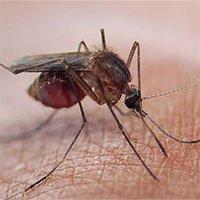 Quần áo chống muỗi đốt đặc biệt được tạo từ siêu vật liệu graphene