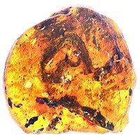 Rắn non chết cứng trong nấm mộ hổ phách 99 triệu năm