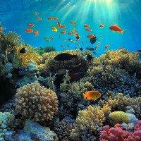 Rạn san hô lớn nhất thế giới đang chết dần