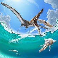 Rhamphorhynchus: Loài thằn lằn bay