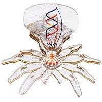 Robot nhện có thể tiến hành phẫu thuật trong tương lai