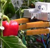 Robot thu hoạch trái cây