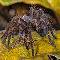 Rợn người hình ảnh những con nhện