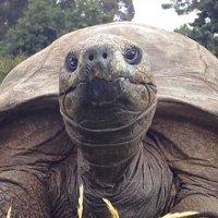 Rùa già nhất thế giới được tắm lần đầu tiên