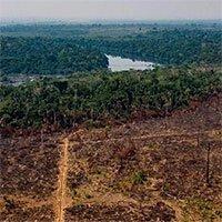 Rừng Amazon đang thải nhiều carbon hơn lượng hấp thụ