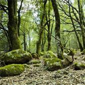Rừng châu Âu trước nguy cơ bão hòa hấp thụ CO2
