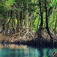 Rừng ngập mặn là gì? Hệ sinh thái rừng ngập mặn ở Việt Nam