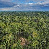 Rừng rậm Amazon đối mặt với