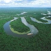 Rừng tự nhiên Amazon đẹp đến