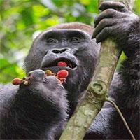 Rượu cứu tổ tiên loài người khỏi tuyệt chủng