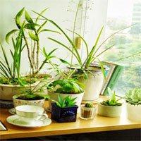 Sai lầm khi trồng nhiều cây và hoa trong phòng