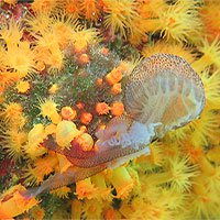 San hô hợp lực bắt sứa ăn thịt