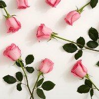 Sắp có hoa hồng