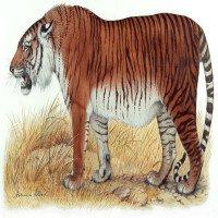 Sắp hồi sinh loài hổ Ba Tư đã tuyệt chủng