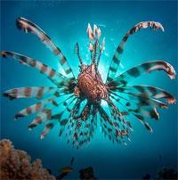Sát thủ kịch độc che đậy bằng vẻ ngoài bắt mắt sống ở vùng biển sâu