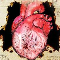 Sau 500 năm, các nhà khoa học tìm ra bí ẩn đằng sau hình ảnh trái tim người của Leonardo da Vinci