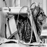 Sau 54 năm bị lãng quên, cô mèo đầu tiên bay vào không gian được đòi lại công bằng