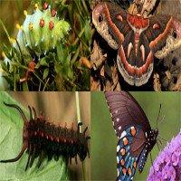 Sâu lột xác thành bướm như thế nào?