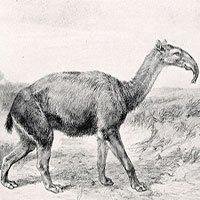 Sẽ mất hàng triệu năm tiến hóa mới bù đắp được số sinh vật tuyệt chủng trong 50 năm tới