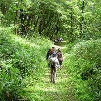 Shinrin-yoku: Cách người Nhật dùng thiên nhiên chữa bệnh
