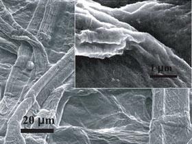 Siêu tụ điện bền, nhẹ, rẻ, đa dụng làm từ giấy