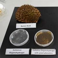Singapore biến vỏ sầu riêng thành băng y tế