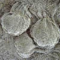 Sinh vật 80 triệu tuổi như