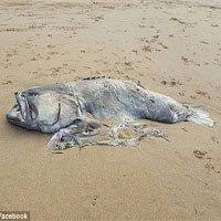 Sinh vật biển nặng 150kg dạt vào bãi biển Australia