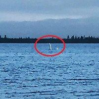 Sinh vật cổ dài giống quái vật hồ Loch Ness ở Nga