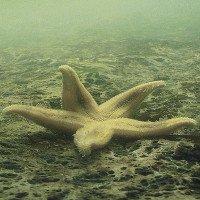 Số liệu khủng khiếp về những vùng biển tử thần trên các đại dương