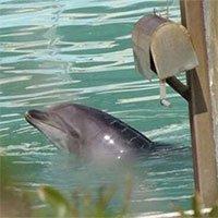 Số phận của cá heo cô đơn nhất thế giới