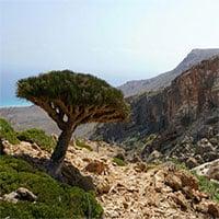 Socotra -