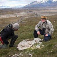 Sự đáng sợ của biến đổi khí hậu: Động vật ở vùng lạnh nhất cũng không thể sống nổi nữa