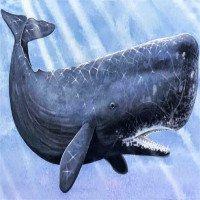 Sự thật: Cá voi trong tiếng Anh được gọi là