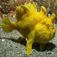 Sự thật đáng kinh ngạc về các sinh vật dưới biển sâu