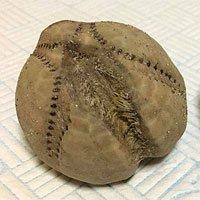 Sự thật phía sau vật thể lạ như quả bóng chày cỡ khủng xuất hiện trên bờ biển