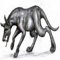 Sự thật về quỷ hút máu Chupacabra