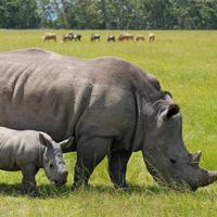 Sự tiến hóa của động vật không theo kịp tốc độ tuyệt chủng