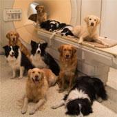 Sự tương đồng đáng ngạc nhiên giữa bộ não con người và loài chó