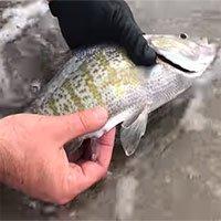 Sửng sốt chứng kiến cảnh cá đẻ con trên tay người