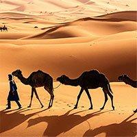 Ta có thể biến sa mạc Sahara thành nhà máy năng lượng Mặt trời lớn nhất thế giới không?