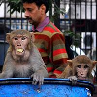 Tại sao các đại dịch của thế giới lại đến từ động vật?