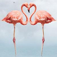 Tại sao chim hồng hạc lại có màu hồng?