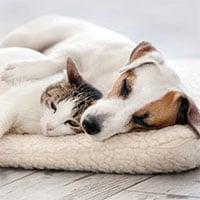 Tại sao chó và mèo bị rụng lông?