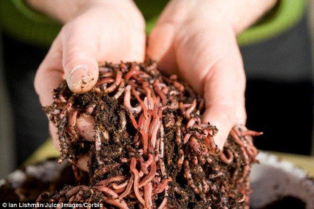 Tại sao giun đất có thể ăn lá nhiễm độc?